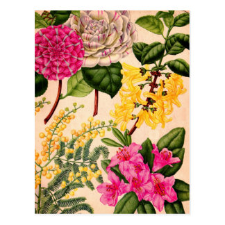 camellia, forsythia, rhododendron and acacia postcard