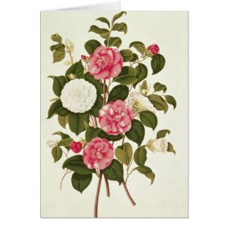 """Camellia  from """"A Monograph on the Genus' Card"""