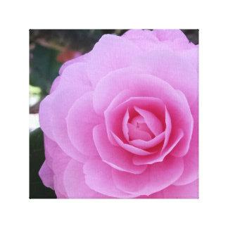 Camellia Pink Flower Art Photograph Canvas Prints