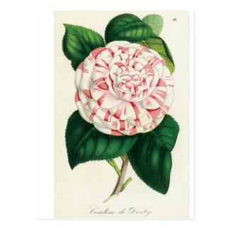 Camellia - Postal Postcard