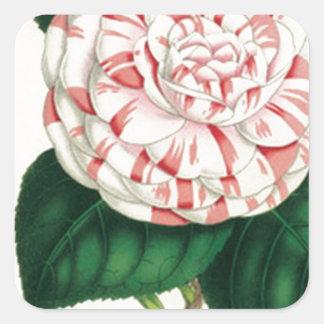 Camellia Square Sticker