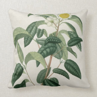 Camellia Thea from 'Phytographie Medicale' by Jose Throw Pillow