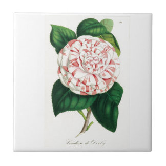 Camellia Tile