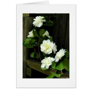 CAMELLIAS CARD