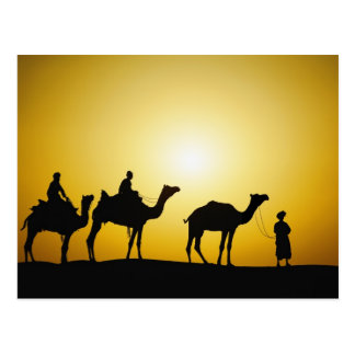 Camels and camel driver silhouetted at sunset, postcard
