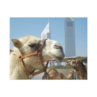 Camels in Dubai Canvas Print