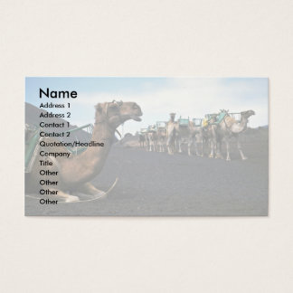 Camels, Lanzarote Business Card