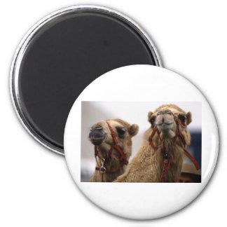 Camels Magnet