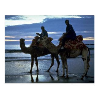 Camels, Morocco Postcard