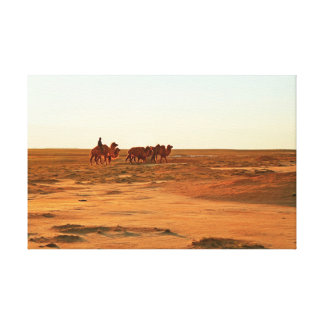 Camels on a pasture. canvas print