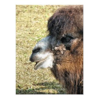 CAMELS PHOTO ART