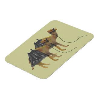 Camels Premium Magnet