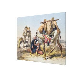 Camels Resting in the Sherkiyeh, Land of Goshen, i Canvas Print