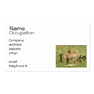 Camels Yum Business Card