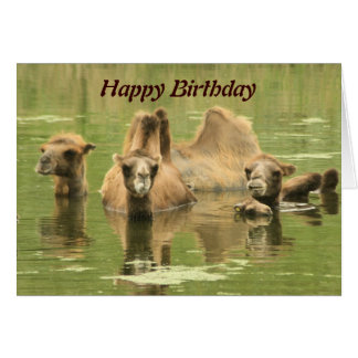 Camels Yum Card