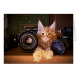 Camera Cat Greetings Card