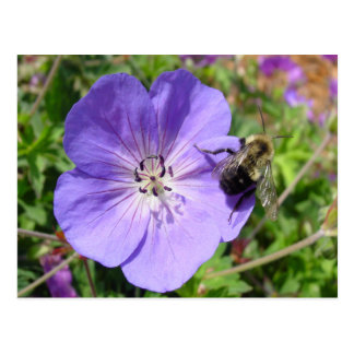 Camera Shy Bumble Bee Postcard
