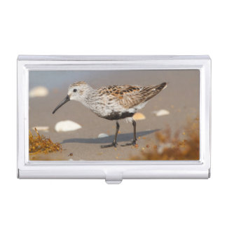 Cameron County, Texas. Dunlin 1 Case For Business Cards