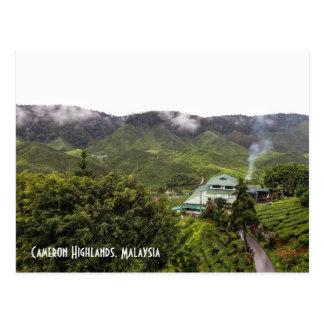 Cameron Highlands tea plantation, Malaysia Postcard