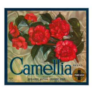 Camillia Brand Oranges Classic Fruit Crate Label Poster