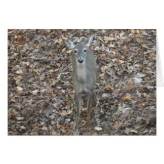 Camouflage Deer in fall leaves Card
