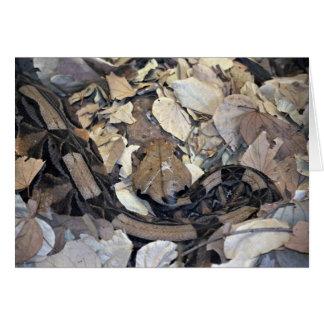 Camouflage snake card