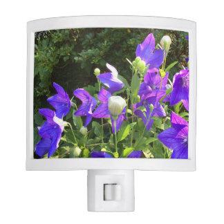 Campanula Cluster (Blue Balloon Flowers) --- Nite Lite