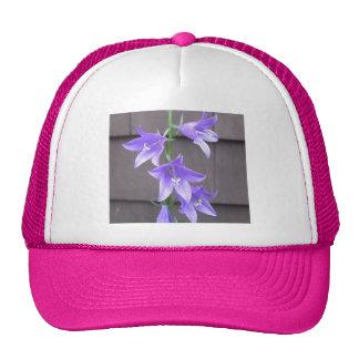 Campanula Garden Plant Flower Blue Hats