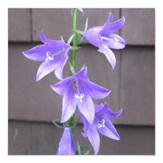 Campanula Garden Plant Flower Blue 5.25x5.25 Square Paper Invitation Card
