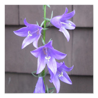 Campanula Garden Plant Flower Blue Personalized Invitation