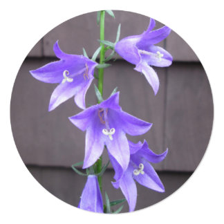 "Campanula Garden Plant Flower Blue 5.25"" Square Invitation Card"