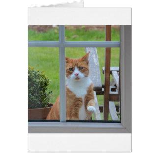Can I Come In Pumpkin. Card