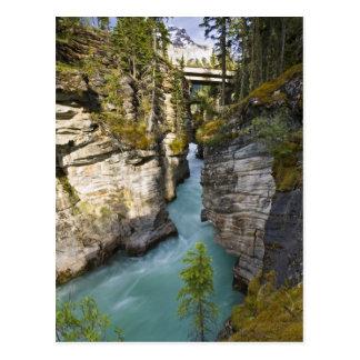 Canada, Alberta, Jasper National Park, Athabasca 2 Postcard