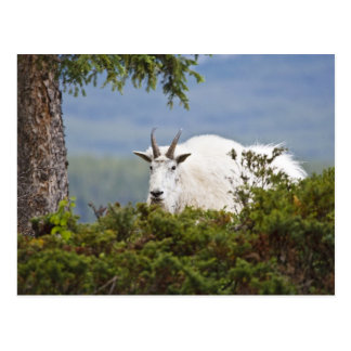 Canada, Alberta, Jasper National Park, Mountain 3 Postcard