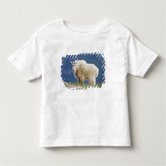 Canada, Alberta, Jasper National Park, Shirts
