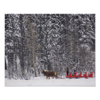 Canada, Banff. Sleigh rides at Martin Stables. Poster