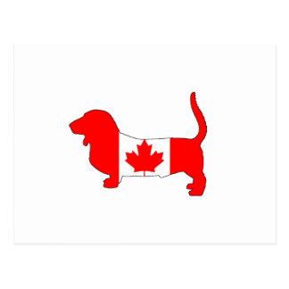 Canada Basset Hound Postcard