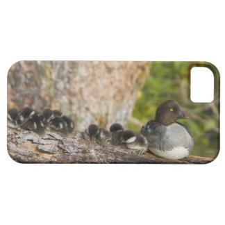 Canada, British Columbia,Common Goldeneye, iPhone 5 Case
