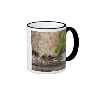 Canada, British Columbia,Common Goldeneye, Mug