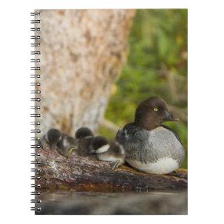 Canada British Columbia Common Goldeneye Spiral Note Books