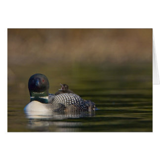 Canada, British Columbia,Common Loon, breeding 2 Greeting Card