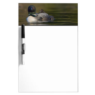 Canada, British Columbia,Common Loon, breeding 2 Dry Erase Whiteboards