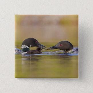Canada, British Columbia,Common Loon, breeding 2 Inch Square Button