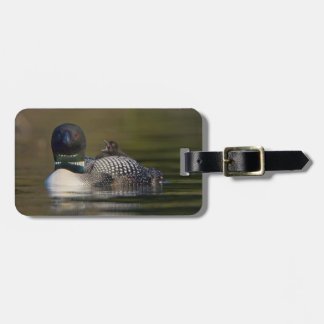 Canada, British Columbia,Common Loon, breeding 2 Tag For Bags