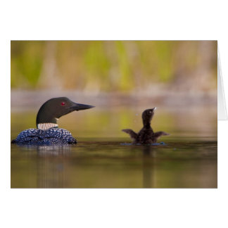 Canada, British Columbia,Common Loon, breeding 3 Greeting Cards
