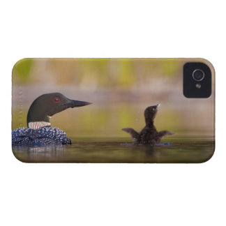 Canada, British Columbia,Common Loon, breeding 3 Blackberry Bold Case