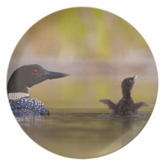 Canada, British Columbia,Common Loon, breeding 3 Party Plates