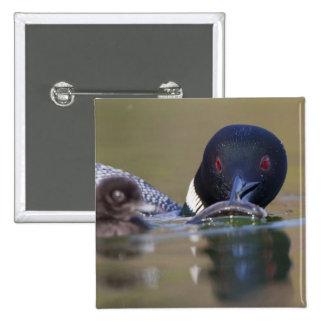 Canada British Columbia Common Loon breeding Pinback Buttons