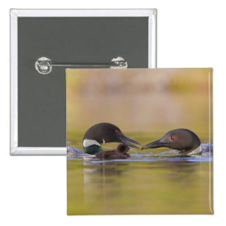 Canada British Columbia Common Loon breeding Buttons
