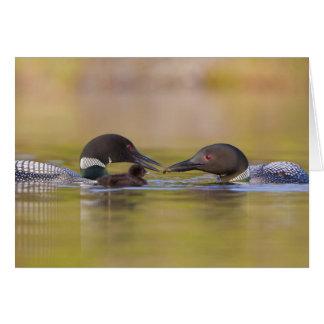 Canada, British Columbia,Common Loon, breeding Card